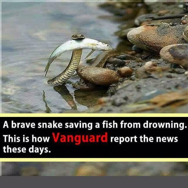 brave snake